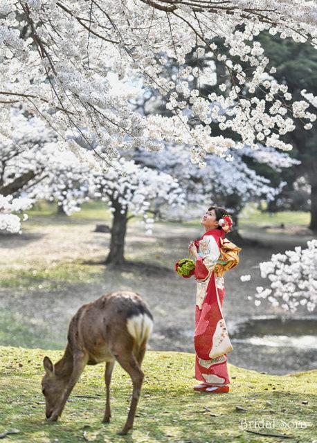 奈良公園 桜 成人式