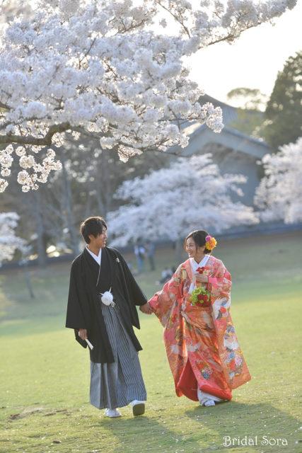 奈良 桜 ロケフォト
