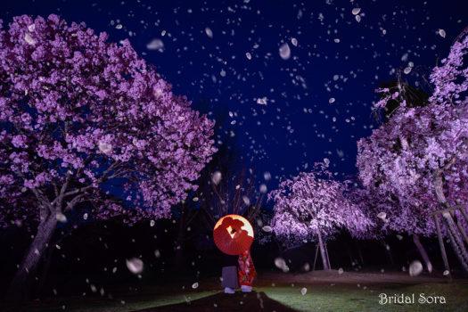 奈良 夜桜 ロケーションフォト