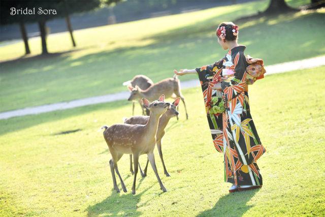 奈良公園 鹿 成人式