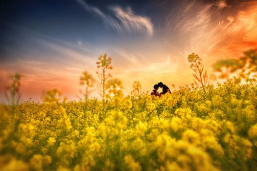 奈良 菜の花 前撮り