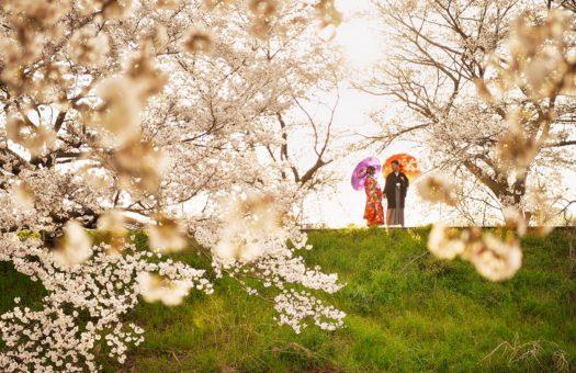 奈良 桜 ロケーションフォト