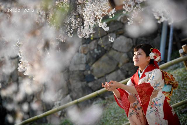 奈良 サクラ ロケフォト