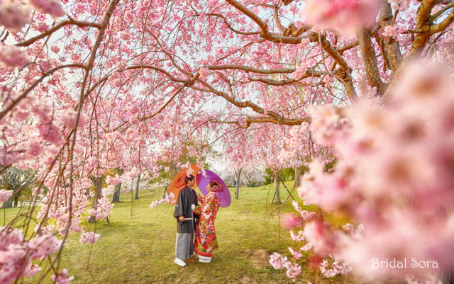 奈良 しだれ桜 前撮り