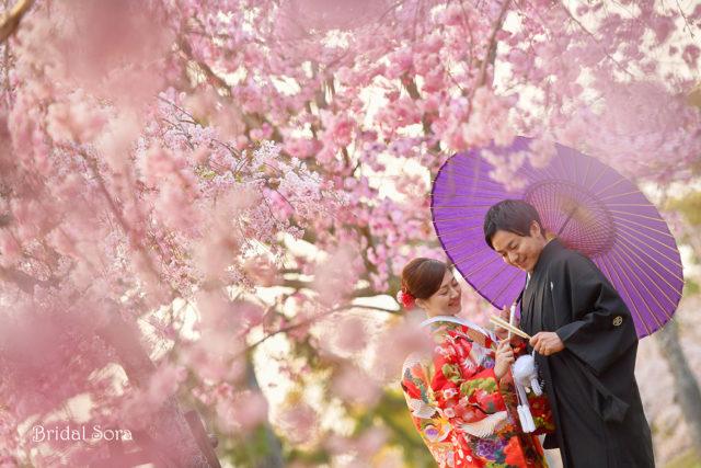 奈良公園 ロケーション撮影 前撮り