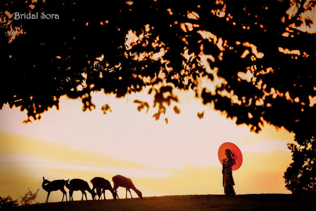 奈良 若草山 前撮り