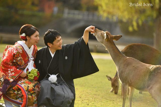 奈良 鹿 前撮り