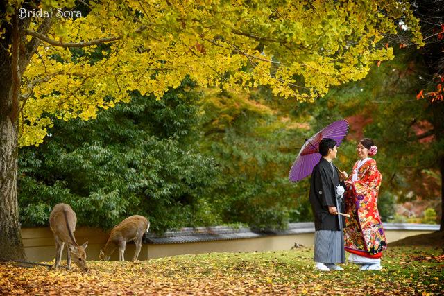 奈良 イチョウ 前撮り