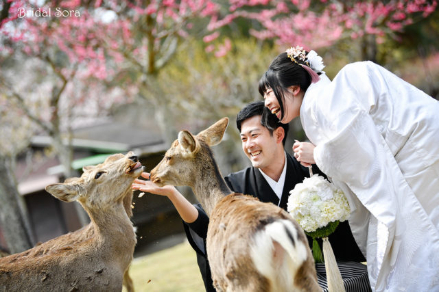 奈良公園 鹿 前撮り