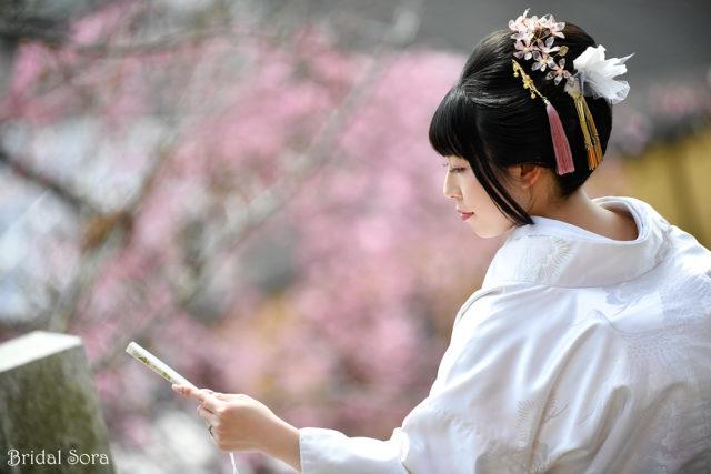 しだれ桜 奈良 ロケーションフォト