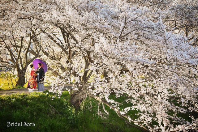 奈良 桜 ウェディング