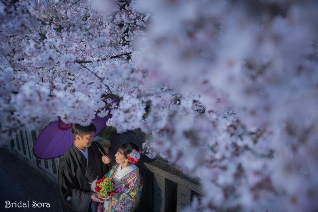 奈良公園 桜 前撮り