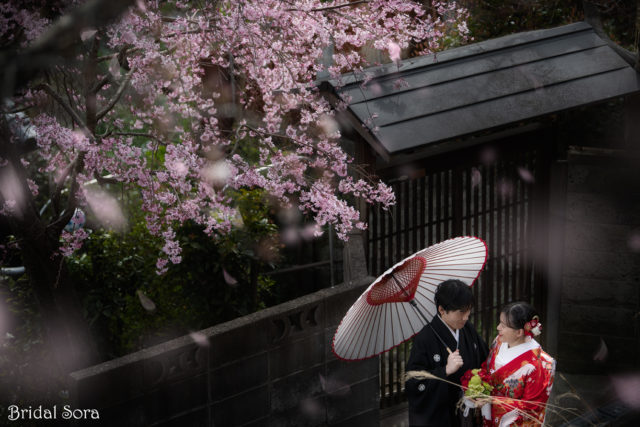 奈良 桜 前撮り