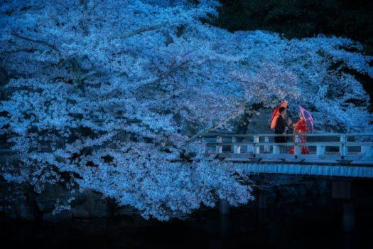 奈良 桜前撮り ロケーションフォト